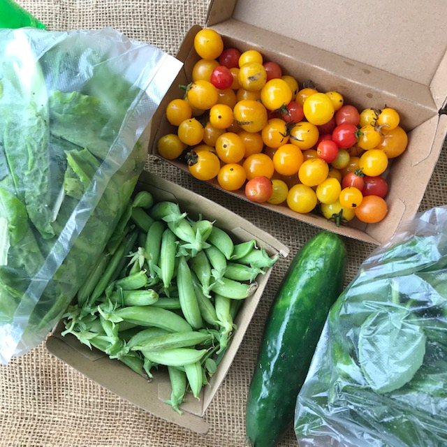Image of snap peas, tomatoes, lettuce, cucumber and herbs